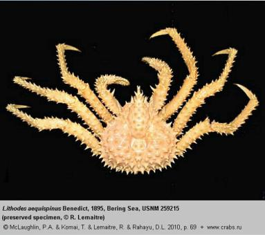 Anomura, photo of crab Lithodes aequispinus Benedict, 1895