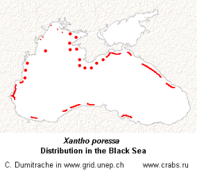 Xantho poressa in the Black sea (map)